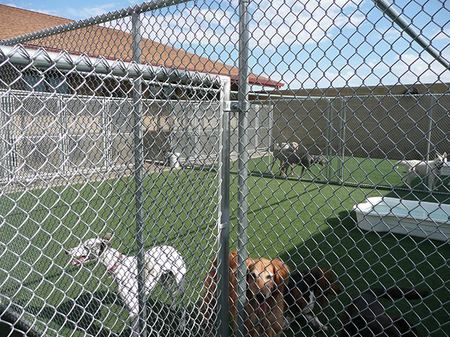 Happy Trails Pet Spa and Resort- Colorado Dog Boarding- Facilities-6