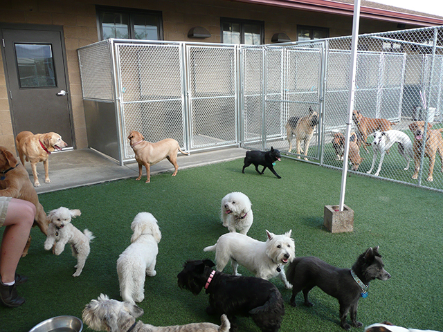 Happy Trails Pet Spa and Resort- Colorado Dog Boarding- Facilities-7
