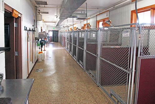 Happy Trails Pet Spa and Resort-Dog Boarding Facilities